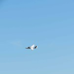 IMG_3553-192-low res