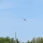 IMG_3589-225-low res