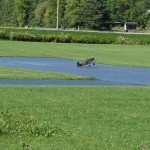 IMG_6701-067-low res