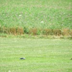 IMG_9766-077-low res